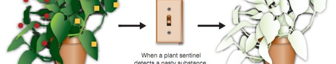Robbanóanyag kutatás növényekkel